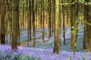 path to healing with psychotherapy